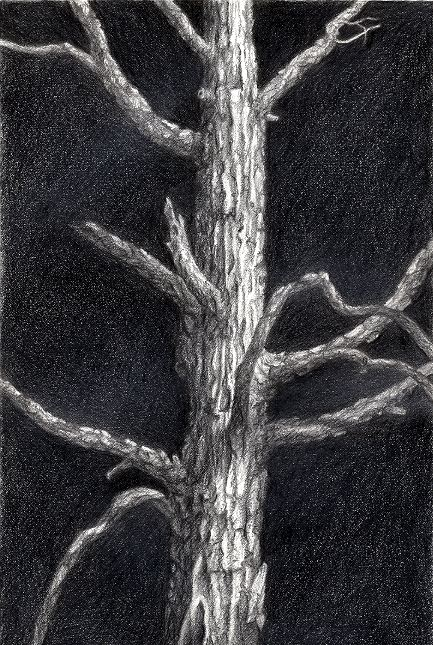 The Tree, Graphite on Paper, by David Jay Spyker
