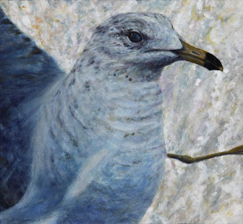 """Startled Gull"", 2011, Watercolor and Acrylics on Paper (Lanaquarelle 140 lb. Cold Pressed), 10 5/8 x 11 1/2 in., by David Jay Spyker"